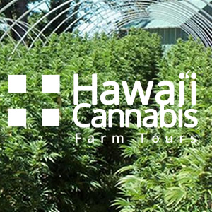 Hawaii Cannabis Farm Tours - Medical Marijuana Safe, Fun and Educational
